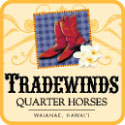 Tradewinds Quarter Horses